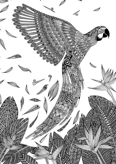Art & Be - Dessin - Perroquet Ara