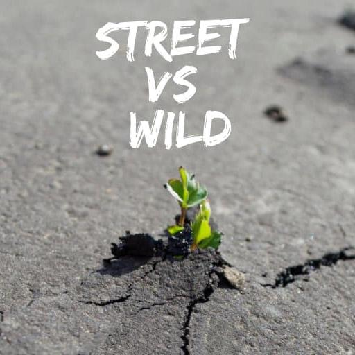 """Expo """"Street VS Wild"""" par Urban Signature"""