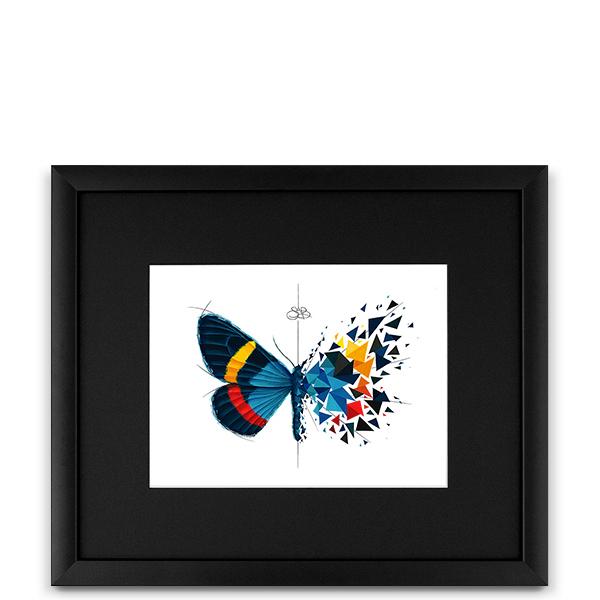 Effet Papillon Paradisea Image
