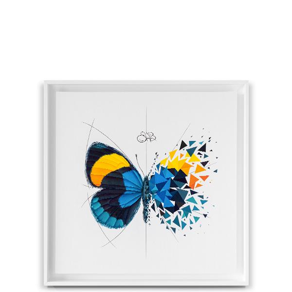 Effet Papillon Sapphira Image