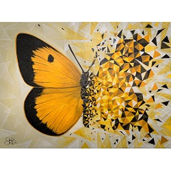 Butterfly Effect - Ambre